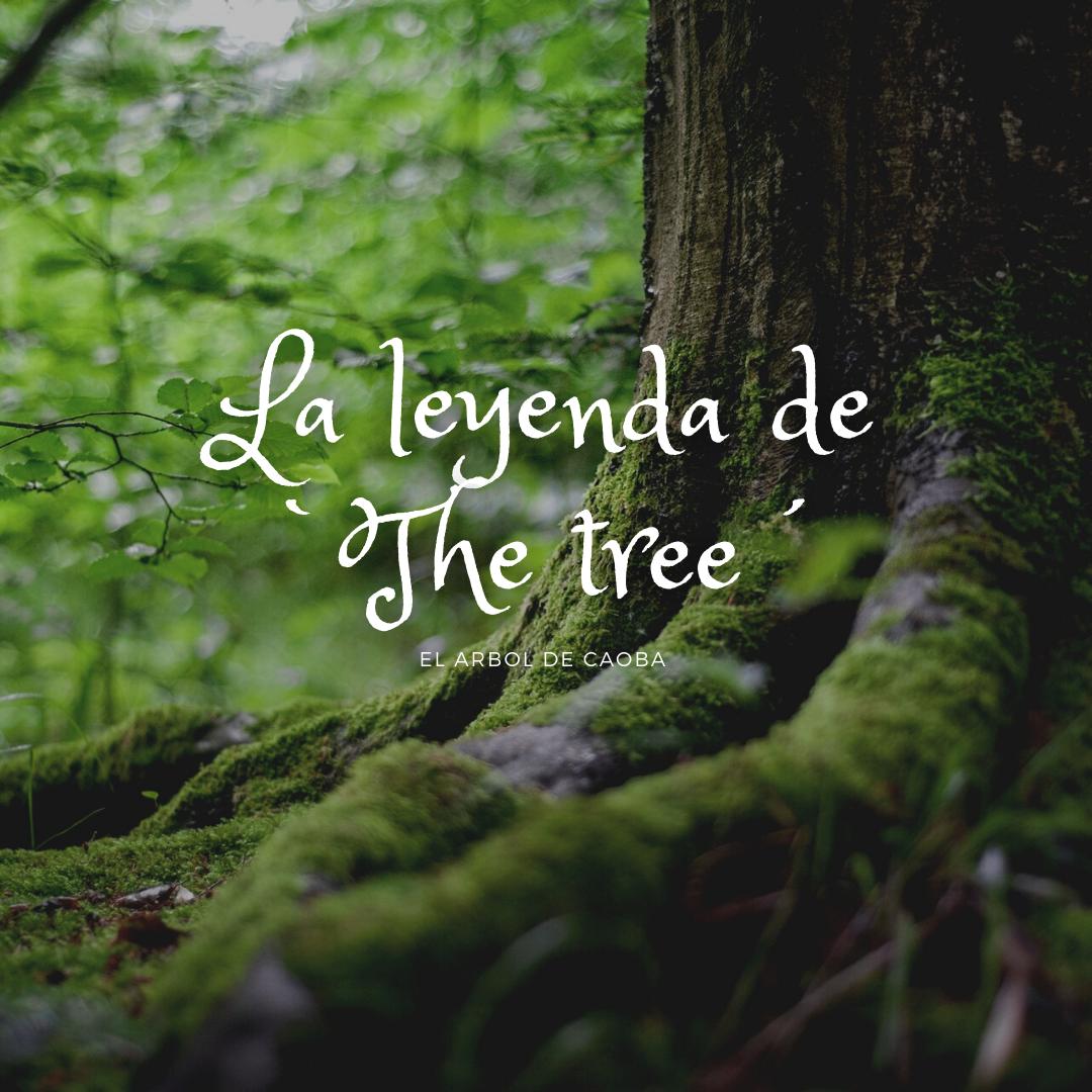 the tree mahagony